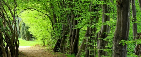 las-drzewa-zielone